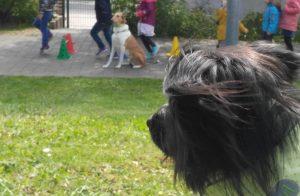 Kitabesuchshunde im Einsatz - Aktion Hund