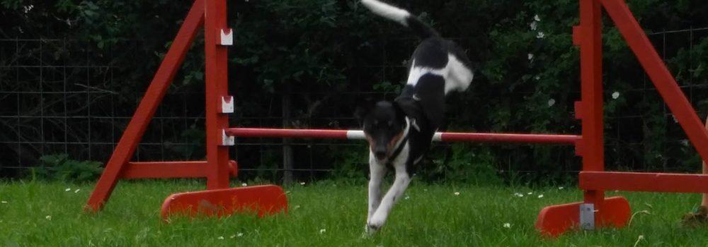 Aktion Hund